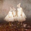 rabbitgirls