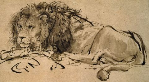 'A Lion Lying Down' by Rembrandt Harmenszoon van Rijn (detail)