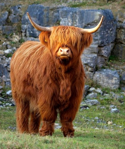 Fabulous and Beautiful Highlander