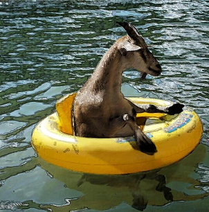 Floating Goat